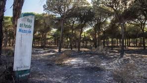 Unas 6.300 personas se han ofrecido desinteresadamente para ayudar a recuperar el entorno de Doñana