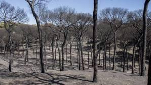 Extinguido al fin después de diez días el incendio en el entorno de Doñana