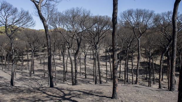 El incendio forestal en el entorno de Doñana afectó a 8.486 hectáreas de matorral y arbolado