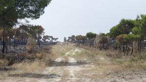 Estado de uno de los cortafuegos en el entorno del poblado de Cabezudos