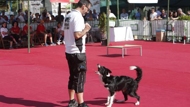 Adiestramiento de perros en la pasada edición de Intercaza