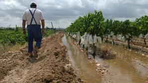 Un agricultor en un viñedo de regadío