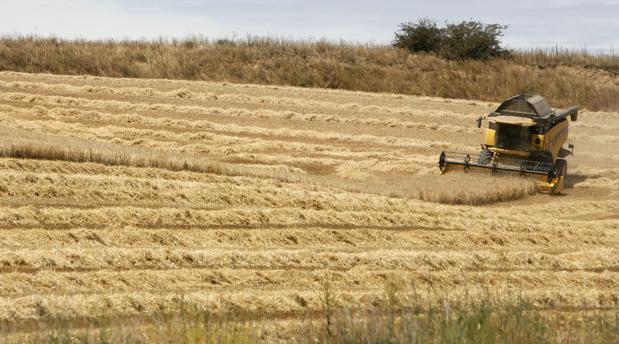 Una cosechadora en un trigal