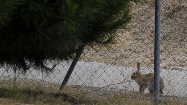 Los conejos están siendo un problema en el sur de la provincia