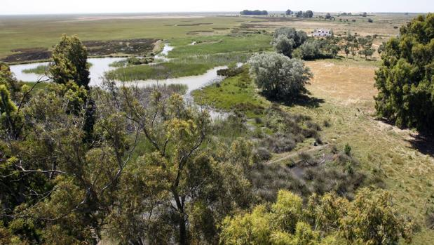Imagen de archivo del Parque Natural de Doñana, en cuyo interior ha estado perdido 48 horas un sevillano