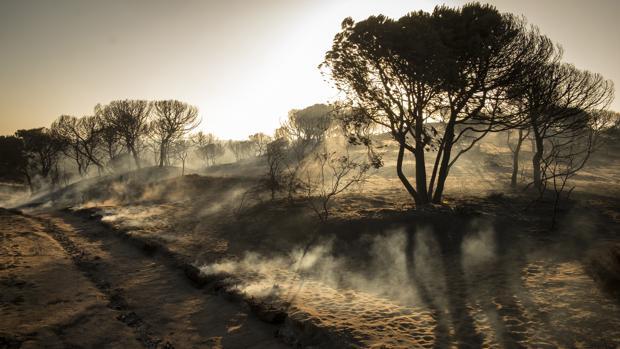 Paraje de Cuesta Maneli tras el incendio producido en junio