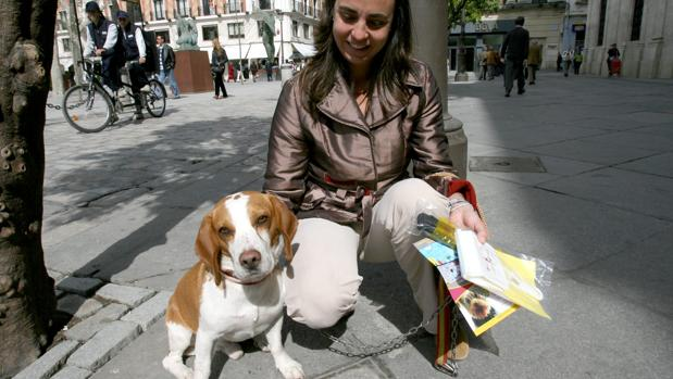 La Junta rebaja el régimen sancionador para mascotas y animales de compañía
