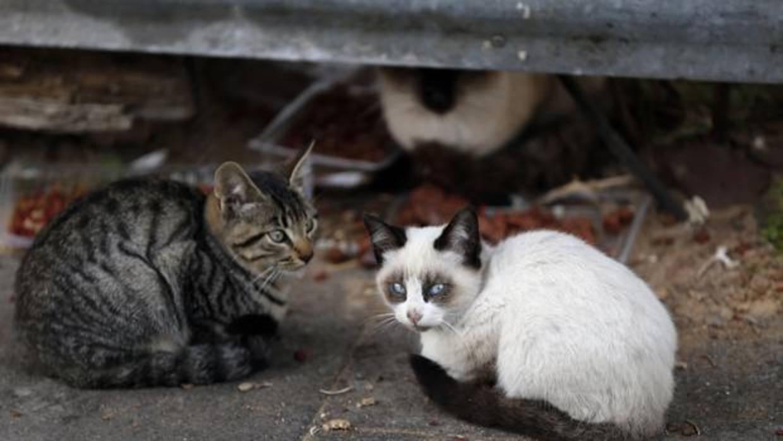 Piden el ingreso en prisión de una pareja que mató a cinco gatitos ...