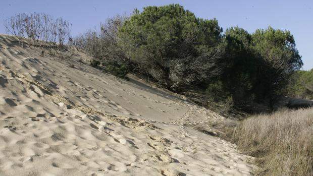 Detalle de una de las dunas del Parque natural de Doñana