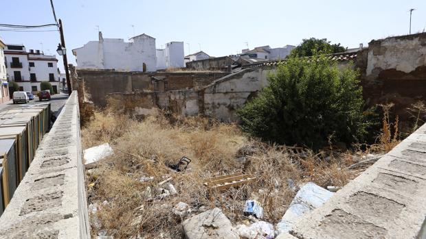 El ayuntamiento de c rdoba estudia usar jaramagos for Vegetacion ornamental