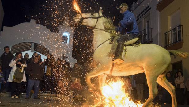 Tradición en el pueblo de Alosno en el Día de las Luminarias, donde hay que saltar el fuego con un equino
