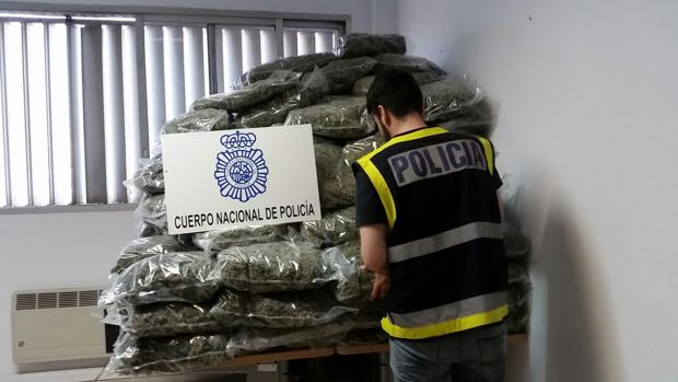 Incautados una banda de traficantes de marihuana