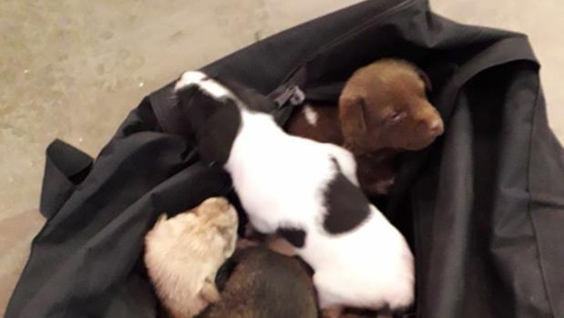 Los cachorros hallados en el contenedor