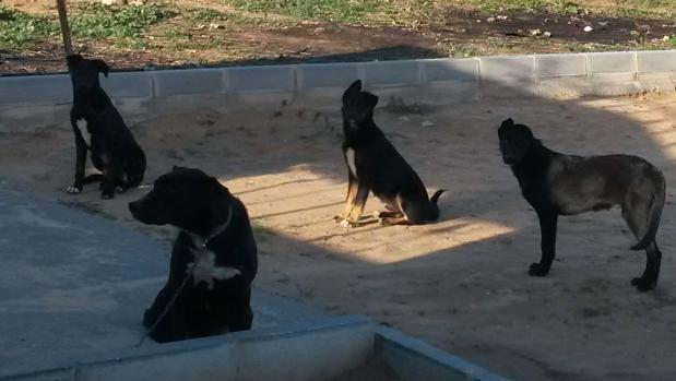 Cuatro de los cinco perros fueron localizados sueltos en una finca cuyo cerramiento estaba en mal estado