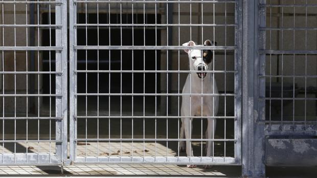 Imagen de archivo de un centro de control animal en Córdoba