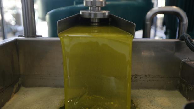 Aceite de oliva recién exprimido en una almazara de Córdoba
