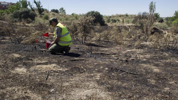 Un agente medioambiental examina una zona calcinada