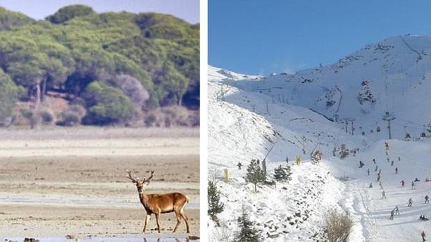 Doñana y Sierra Nevada: los dos Parques Nacionales más importantes de Andalucía