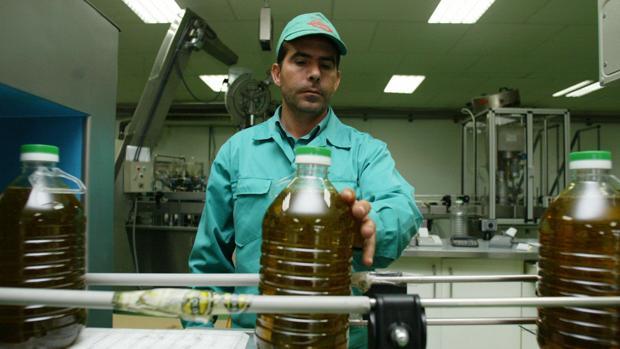 La producción de aceite podría alcanzar las dos toneladas por lo que es necesario que el consumo suba