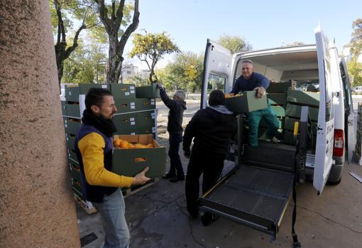 Descarga de comida en el Banco de Alimentos Medina Azahara de Córdoba