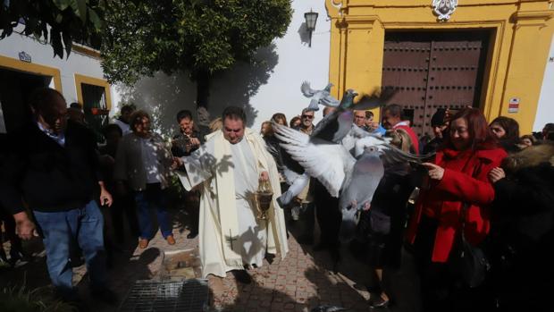 El párroco del Carmen, don Antonio bendice unas palomas en el día del patrón de los animales