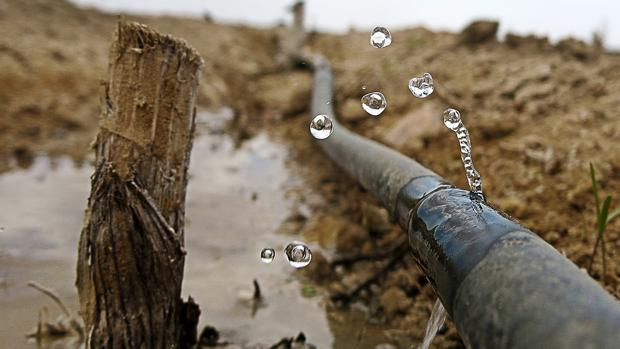 Efectos de la sequía en un cultivo de riego por goteo