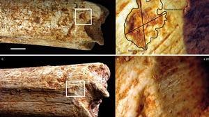 Fuimos cena para las hienas hace 500.000 años