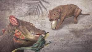 El didelphodon vorax podía comer una amplia variedad de alimentos, desde caracoles a pequeños dinosaurios.