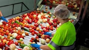 Una trabajadora selecciona las hortalizas en la planta de Alvalle