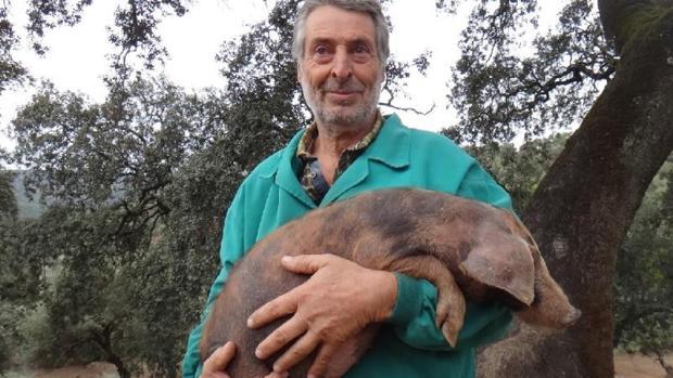 Eduardo Donato sujeta en brazos uno de sus cerdos ibéricos manchados