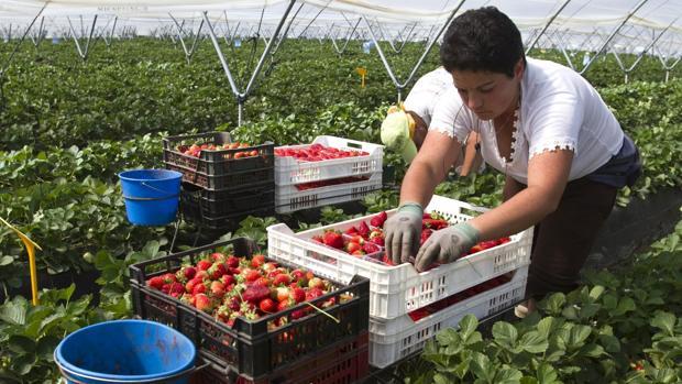 Trabajadores en un campo de fresas de Palos de la Frontera