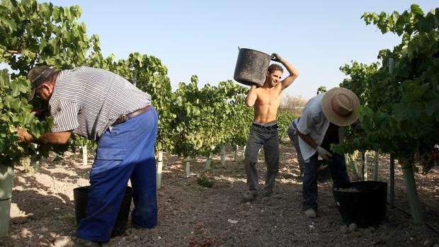 Trabajadores eventuales en la campaña agrícola de la vendimia