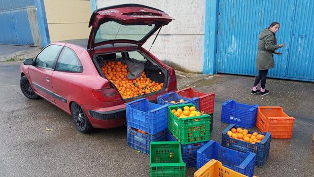 Desmanteladas bandas de ladrones de frutas en la Vega y la Campiña