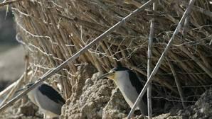 Las marismas de Doñana son el lugar de invernada más importante en Europa de anátidas y aves acuáticas