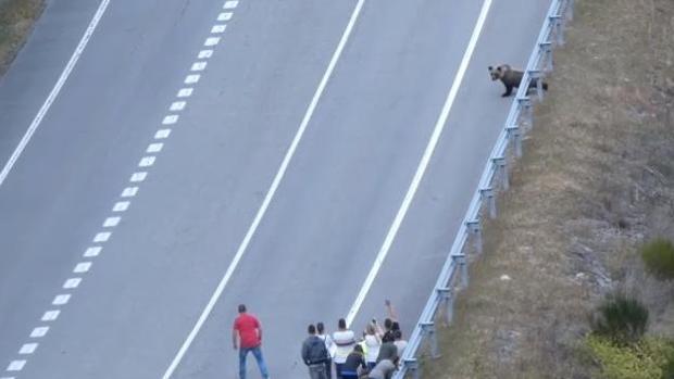 Un grupo de personas persigue a un oso en la comarca del Alto Sil leonés