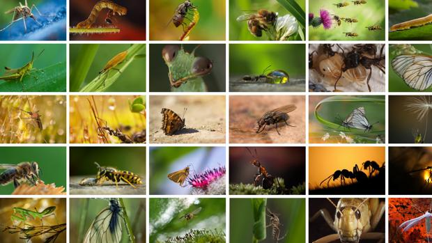 No hay medios para vigilar el estado de los insectos