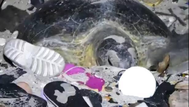 Vídeo: La lucha de una tortuga contra el plástico