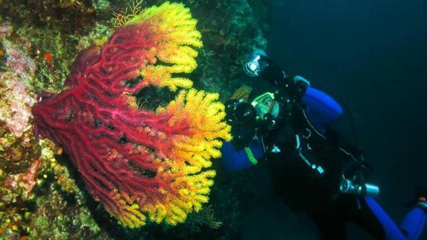 El océano que rodea las Galápagos lleva calentándose desde 1970