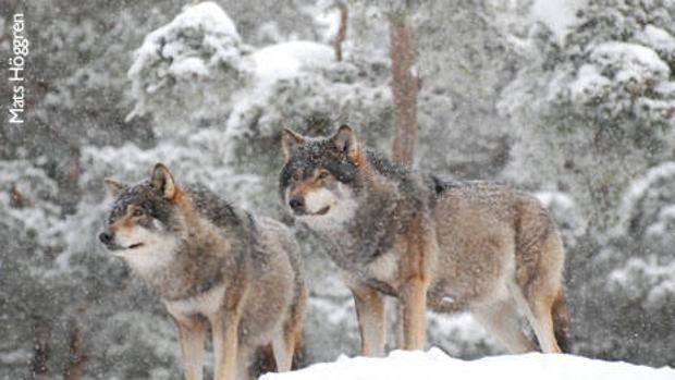 Las extinciones provocadas por el ser humano dan pistas para proyectar la distribución de especies ante el cambio climático