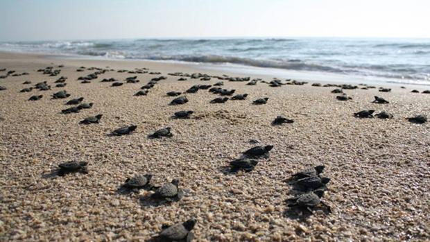 Un estudio internacional ha registrado los patrones de movimiento de más de 2.500 animales en los océanos