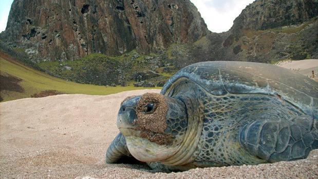 Brasil protege casi 1 millón de kilómetros cuadrados de extraordinaria biodiversidad en el Atlántico