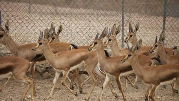 Las guerras causan estragos sobre la fauna de los desiertos del Sáhara y el Sahel