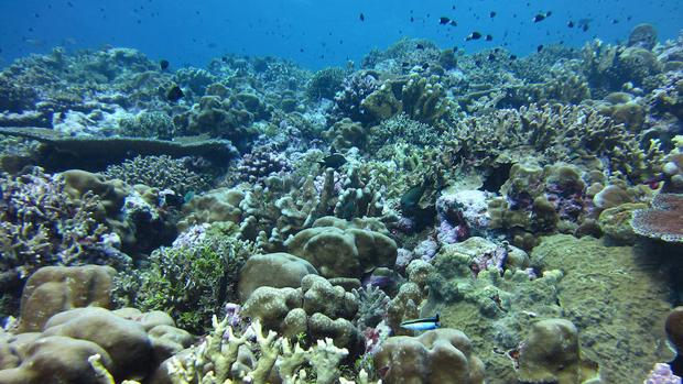 La Gran Barrera de Coral, silenciada por los ciclones y los episodios de blanqueamiento