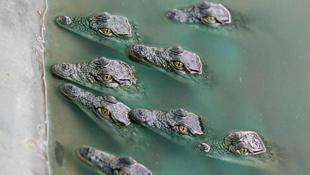 Los grandes depredadores están retornando a antiguos hábitats hoy humanizados