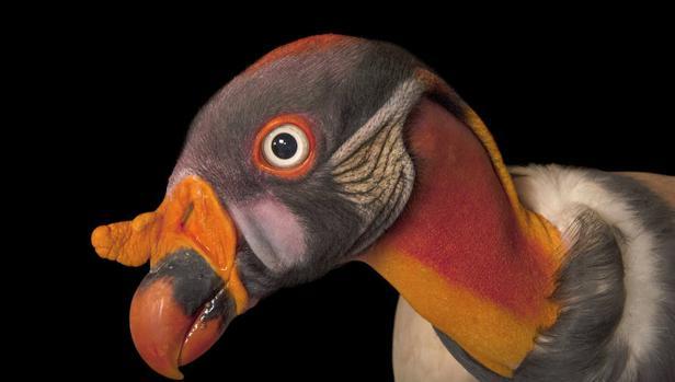 Salvar especies a través del poder de la fotografía