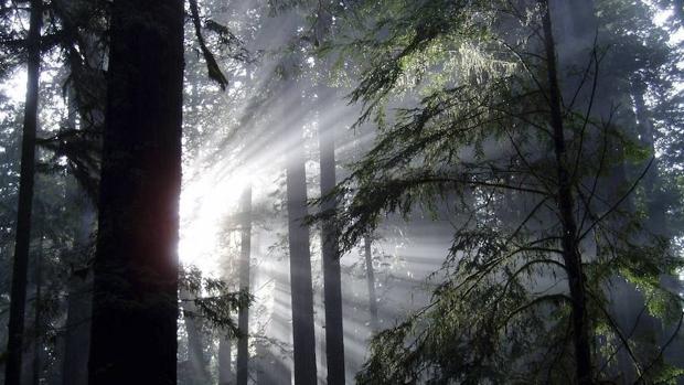 La Humanidad ha triplicado la extracción de recursos naturales desde 1970