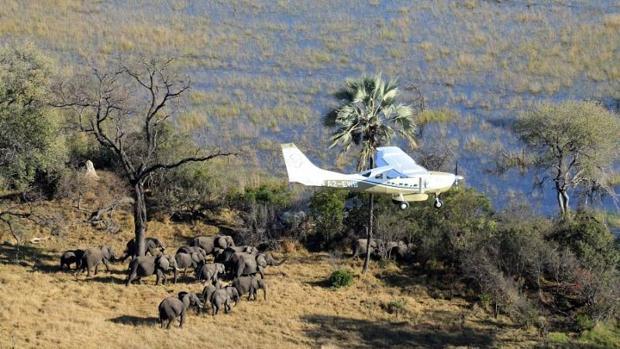 Las caza furtiva de elefantes en África está disminuyendo, aunque la especie sigue amenazada