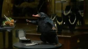 Así serán las siguientes películas de la saga «Animales fantásticos y dónde encontrarlos»