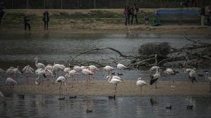 Celebración del Día Internacional de los Humedales en la Cañada de los Pájaros