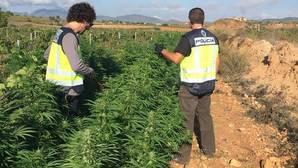 Detenidos 14 chinos por exportar marihuana desde Sevilla a Europa